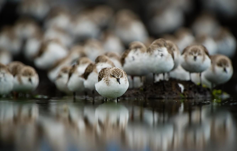 Фото обои птицы, природа, фон