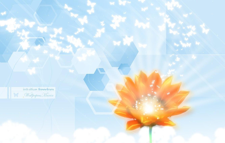 Фото обои цветок, лекгость, свет, бабочки, чистота, мозаика