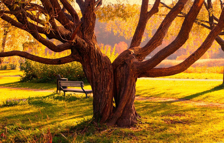 Фото обои осень, деревья, скамейка, парк, дерево, тропа, Пейзаж, тропинка, скамья, трова