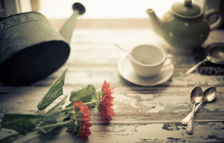 Фото обои цветы, фон, чашка