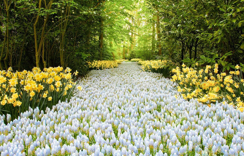 Картинка дорога из цветов