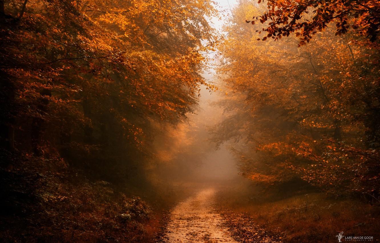 Фото обои осень, лес, природа, тропинка