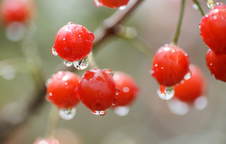 Фото обои капли, макро, вишня, ягода, красная