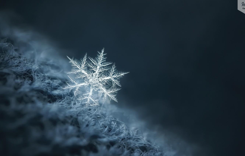 Фото обои зима, макро, снежинка