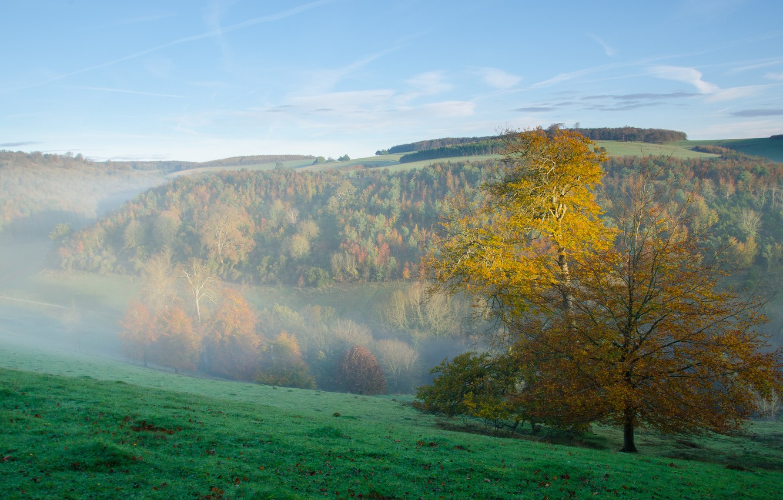 Фото обои осень, лес, небо, трава, горы, туман, утро, склон
