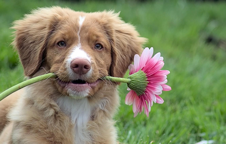 сияют картинка животное с цветком сруба
