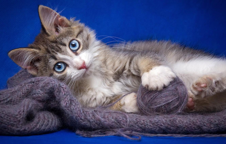 Фото обои кошка, кот, клубок, котенок, нитки, пряжа, обои от lolita777