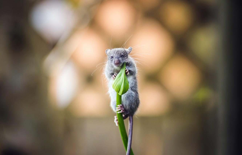 Фото мышонка в цветке