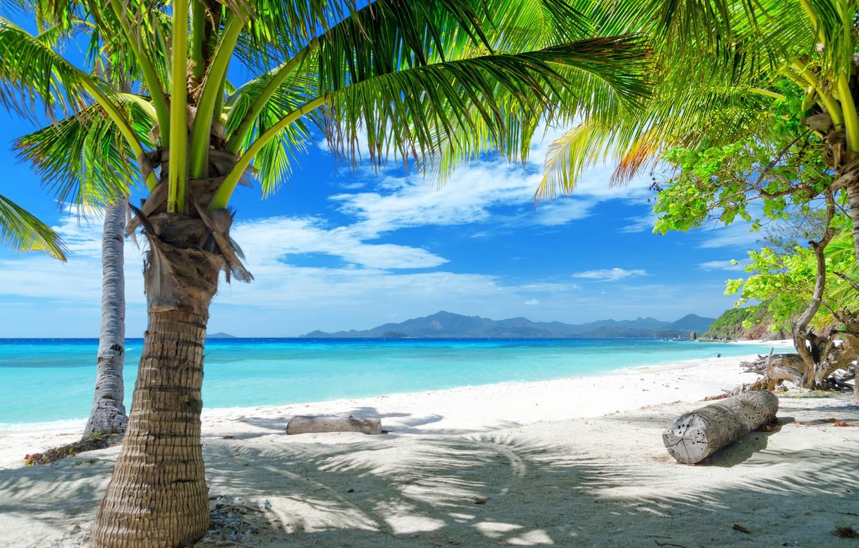 Фото обои песок, море, пальма, берег, брёвна