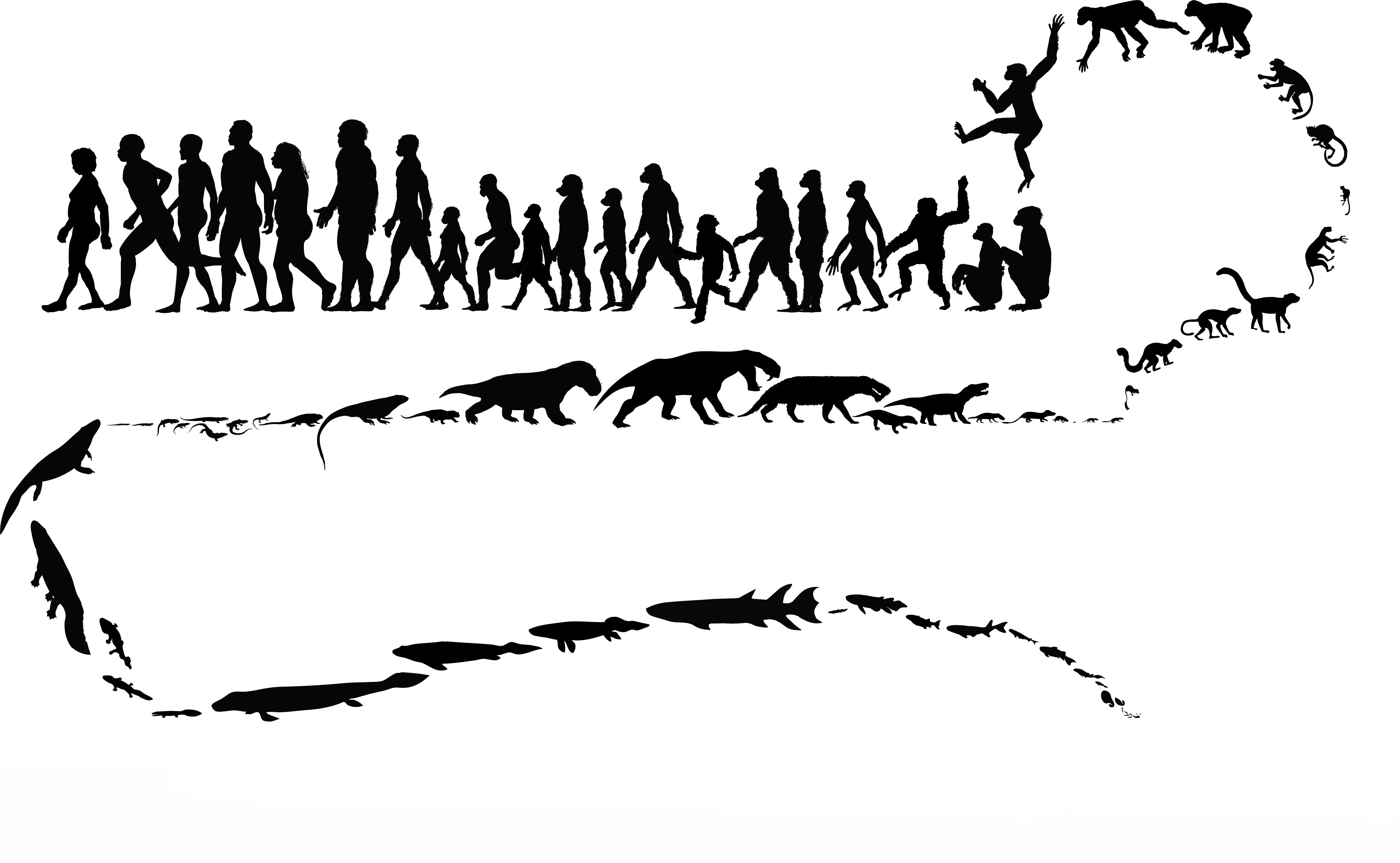 evolution of animals - HD3612×2226