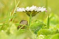 Картинка лягушка, блики, трава, цветок, капли