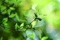Картинка листики, обои для рабочего стола, свежесть, зелень, green leaf, macro bokeh, green leaves, боке обои, ...