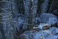 Картинка страх, лес, ситуация, верёвки, парень