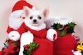 Картинка Щенок, собаки, праздник