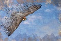 Картинка стиль, небо, птица