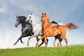 Картинка обои от lolita777, белый, рыжий, кони, лошади, тройка, три, поле, красавцы, черный, небо, трава, ряд