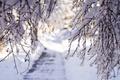 Картинка ветки, свет, снег, зима