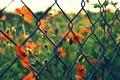 Картинка зелень, макро, цветы, красный, фон, сетка, widescreen, обои, размытие, ограждение, wallpaper, цветочки, широкоформатные, background, полноэкранные, ...