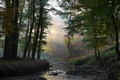 Картинка лучи, солнечные, лес, ручей