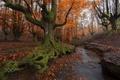 Картинка природа, осень, Испания, баския