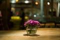 Картинка цветы, макро, стол, Малиновые, вазочка, лепестки, розовые, блики
