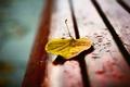 Картинка макро, лист, лавка, скамейка, скамья, размытость, лавочка, желтый, осень, капли