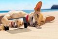 Картинка лежит, отдых, загорает, улыбка, пляж, море, на песке, юмор, смартфон, солнце, снимок, Чихуахуа