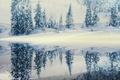 Картинка отражение, снег, елки, зима
