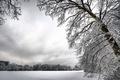 Картинка Зима, снег, белый, деревья