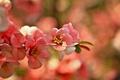 Картинка ветка, розовая, цветущая, сакура