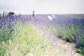 Картинка цветы, широкоэкранные, HD wallpapers, лаванда, обои, зелень, поле, полноэкранные, background, fullscreen, широкоформатные, цветочки, фон, widescreen, ...