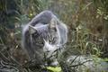 Картинка кошка, взгляд, животное, фон, прогулка, обои, деревня, Животные, лето, кот