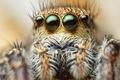 Картинка паук, глаза, макро, волоски