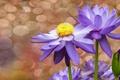 Картинка цветы, пузыри, фон, водяные лилии