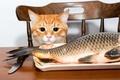 Картинка кот, стол, рыба, рыжий, стул, нож
