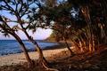 Картинка Корни, Деревья, Море, Пляж, Камни