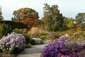 Картинка деревья, цветы, парк, Германия, дорожка, кусты, астры, Эссен, Grugapark Essen