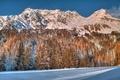 Картинка деревья, горы, снег, лес, зима