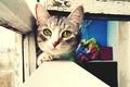 Картинка взгляд, мордочка, окно, рама, Кошка, зеленые, глаза