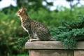 Картинка зелень, кот, полосатый, парапет