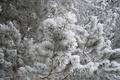 Картинка зима, снег, елки, природа, иней, лес