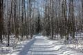 Картинка зима, дорога, лес, снег, деревья, следы