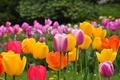 Картинка colors, spring, поле, field, весна, Tulips, тюльпаны