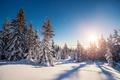 Картинка snow, снег, зима, снежинки, елка, nature, лес, winter