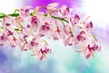 Картинка цветение, Orchid, орхидеи