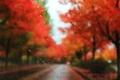 Картинка размытость, стекло, дорога, деревья, осень, дождь, капли