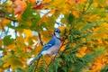 Картинка осень, листья, дерево, птица, ветка