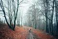 Картинка осень, прогулка, деревья, дорога