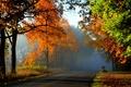Картинка дорога, осень, листья, туман, желтые, лес.деревья
