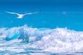 Картинка море, волны, чайка, пена